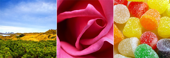 June - Great Outdoors Month, National Rose Month and National Candy Month